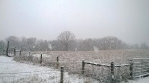 Peaceful Fields being wrapped in a blanket of white