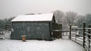 Snow falling on the goat barn