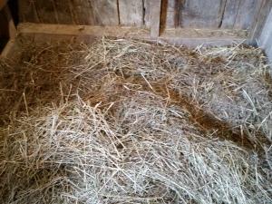 Comfy new goat bed