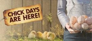 chickdays